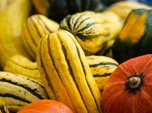 Delicata squash. With some pumpkin's at an October farmer's market Stock Image
