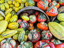 Delicata and Turban squashes at the market Royalty Free Stock Photos