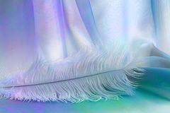 Delicate Angelic Lilac Feather Background Stock Photography