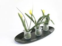 Delicate Arrangement. An arrangement in the ikebana style. Yellow tulips in three containers Stock Photos