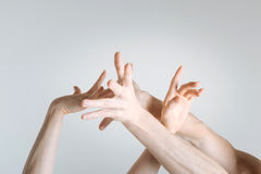 Delicate athletes hands demonstrating interaction in the studio. Art of hands motion. Tender sophisticated gracious athletes hands locating in the white colored Royalty Free Stock Photos