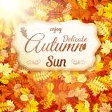 Delicate autumn sun. EPS 10 Stock Photo