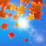Delicate autumn sun with glare on blue sky. Royalty Free Stock Image