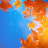 Delicate autumn sun with glare on blue sky. Stock Images