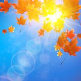 Delicate autumn sun with glare on blue sky. Royalty Free Stock Photos