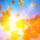 Delicate autumn sun with glare on blue sky. Royalty Free Stock Images