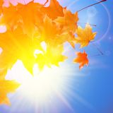 Delicate autumn sun with glare on blue sky. Stock Photo