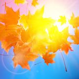 Delicate autumn sun with glare on blue sky. Stock Photography