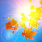 Delicate autumn sun with glare on blue sky. Stock Image