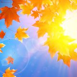 Delicate autumn sun with glare on blue sky. Royalty Free Stock Photo