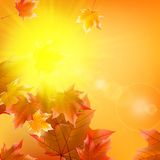 Delicate autumn sun with glare on gold sky. Royalty Free Stock Image