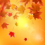 Delicate autumn sun with glare on gold sky. Royalty Free Stock Photography