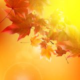 Delicate autumn sun with glare on gold sky. Stock Image
