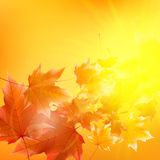 Delicate autumn sun with glare on gold sky. Royalty Free Stock Photos