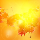 Delicate autumn sun with glare on gold sky. Royalty Free Stock Images