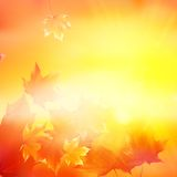 Delicate autumn sun with glare on gold sky. Stock Photography