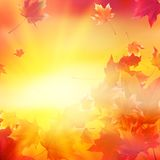 Delicate autumn sun with glare on gold sky. Royalty Free Stock Photo
