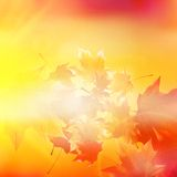 Delicate autumn sun with glare on gold sky. Stock Photos