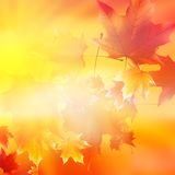 Delicate autumn sun with glare on gold sky. Stock Photo