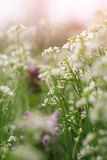 Delicate background with wildflowers Stock Photos