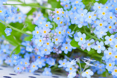 Delicate blue flowers forget-me-on Stock Images
