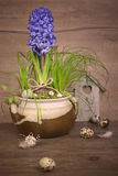 Delicate blue hyacinth on wooden background Royalty Free Stock Photo