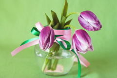 Delicate bouquet of purple tulips Stock Photos
