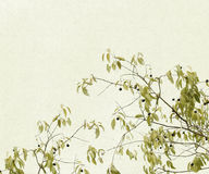 Delicate Branches of Leaves and Berries Royalty Free Stock Image