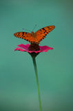 A delicate butterfly over a flower Royalty Free Stock Photography