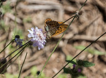 The delicate butterfly. Rich eating flower pollen den the field royalty free stock image