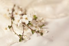 Delicate cherry bouquet with lace napkin Stock Photos