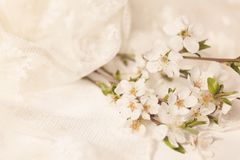 Delicate cherry bouquet with lace napkin Stock Image