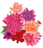 Delicate Chrysanthemum flower bouquet isolated. Vector illustration Stock Images