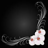 Delicate corner frame with orchid flowers Royalty Free Stock Images