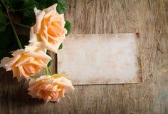 Delicate cream roses Stock Images