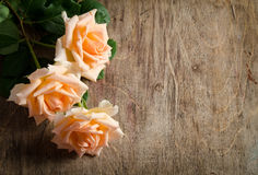 Delicate cream roses Stock Photo