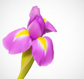 Delicate exotic  flower Stock Image
