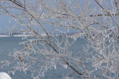 Delicate filigree of iced branches Stock Images
