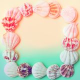 Delicate flat white striped sea shells arranged in frame on gradient duotone pastel pink turquoise background. Tropical theme royalty free stock photography