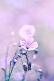 Delicate flax flower. Very soft focus. Soft delicate purple shades Stock Photo