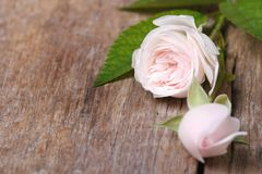 Delicate floral frame from pink roses close-up Stock Photos