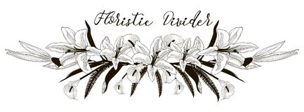 Delicate Floral Text Divider. Lily Flower Design Element. Black Hand Drawn Floral Divider, Line Border with Delicate Lily Flowers. Decorative Outlined Vector Royalty Free Stock Photos