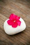 Delicate flower Stock Photo