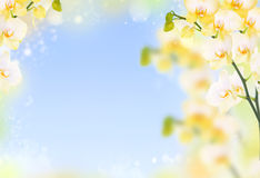 Delicate flower background of yellow orchids Stock Images