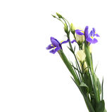 Delicate flower on a white Stock Images