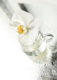 Delicate flower white orchid Royalty Free Stock Photo