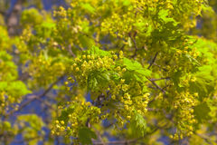Yellow-green spring Stock Photos