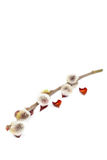 Delicate flowering willow branch on white. Royalty Free Stock Photo