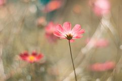 Delicate flowers of coral shades. Selective soft focus. Art work.  Stock Images