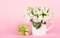 Delicate flowers galanthus on pink background. Gift box with bow and flowers. Snowdrops. stock photo